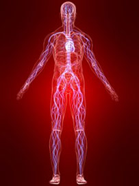 Inflammation in the body